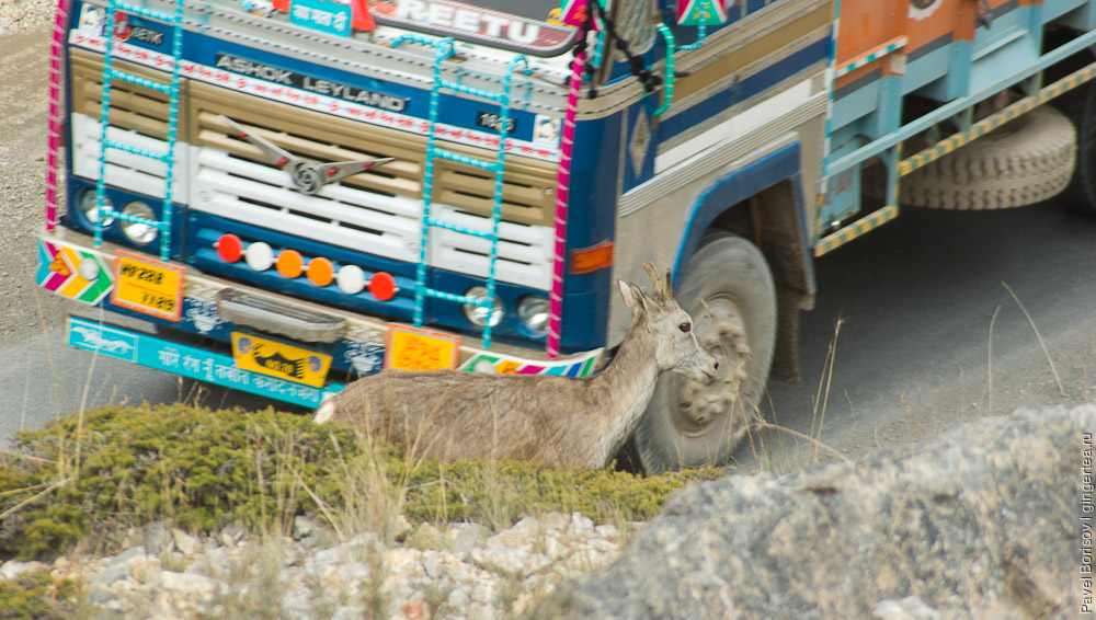 тибетский тар на обочине дороги рядом с грузовиком