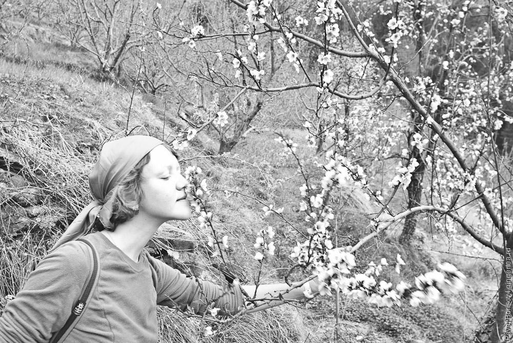 в долине Куллу цветут яблони и сливы