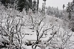 В индийском сугробе, или зима в долине Куллу