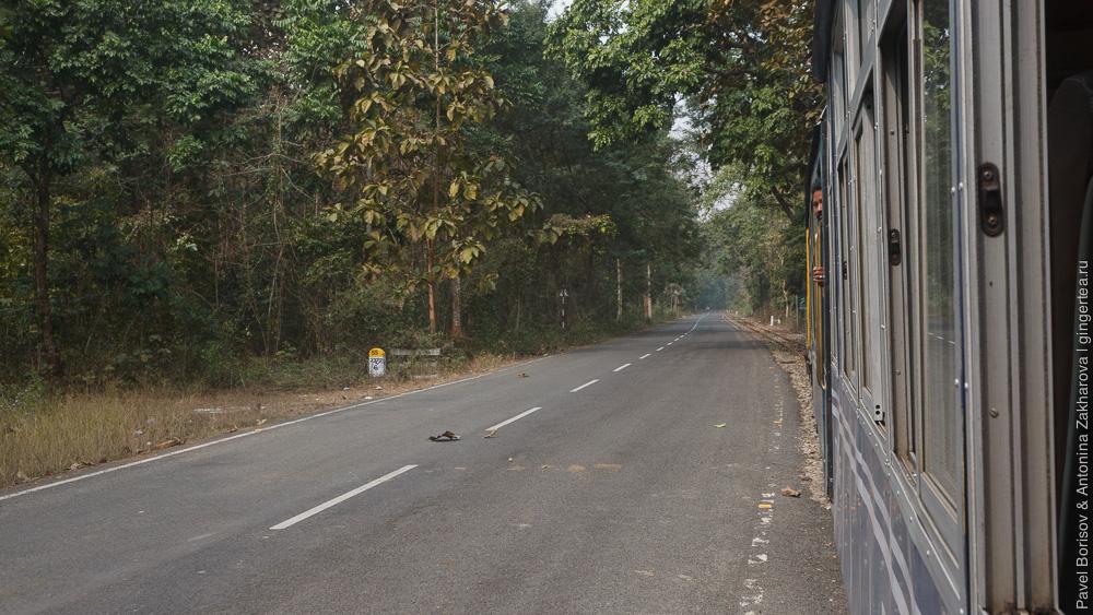 сафари в джунглях Дарджилингская Гималайская железная дорога