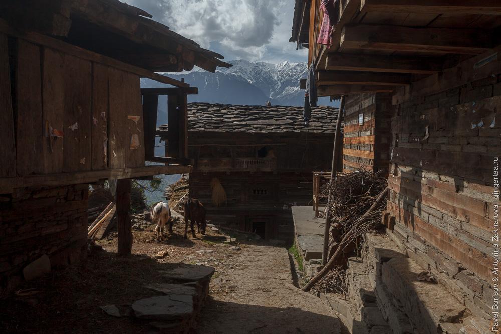 весна в Индийских Гималаях