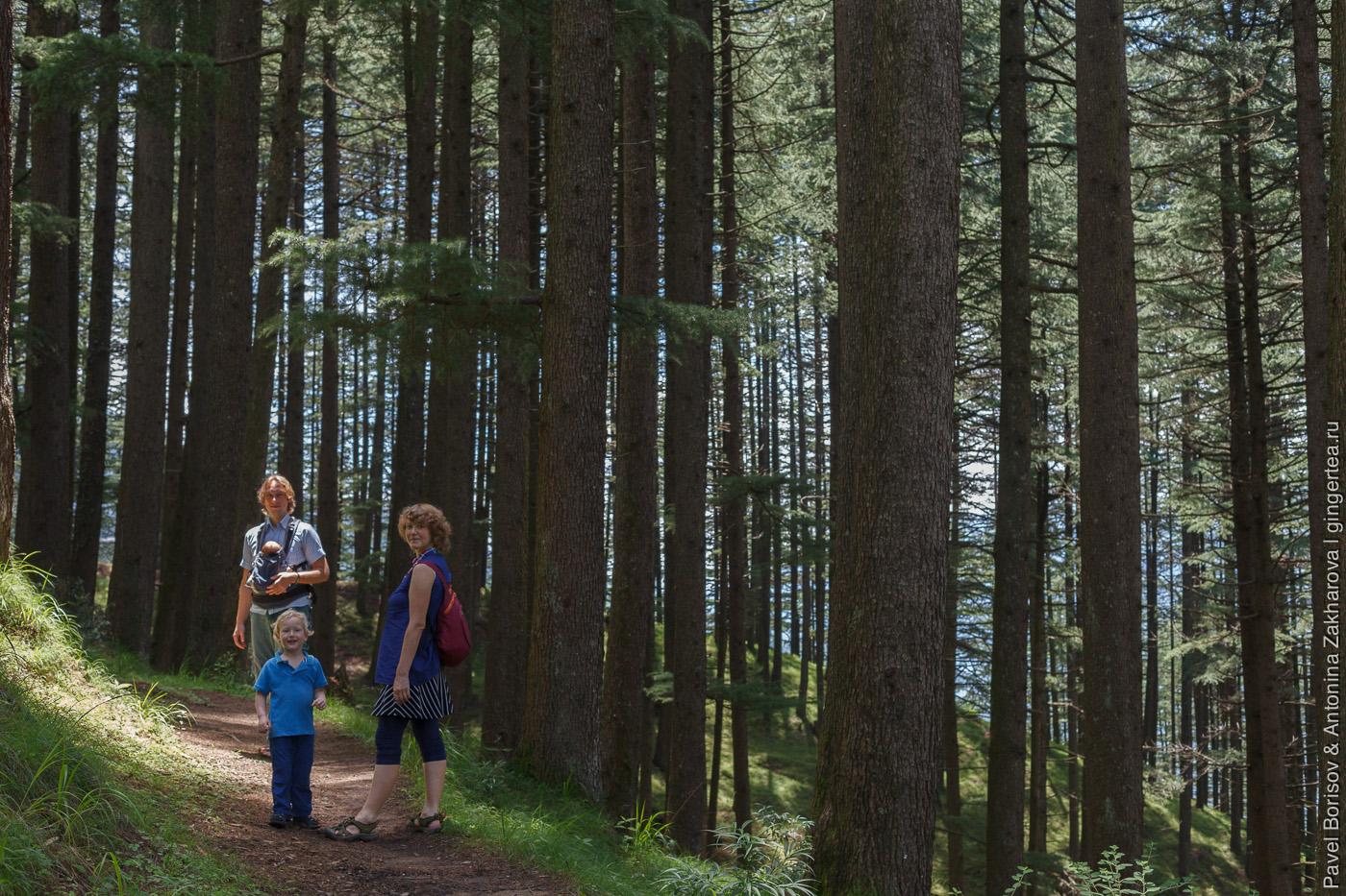 семья в лесу в долине Куллу, Индия