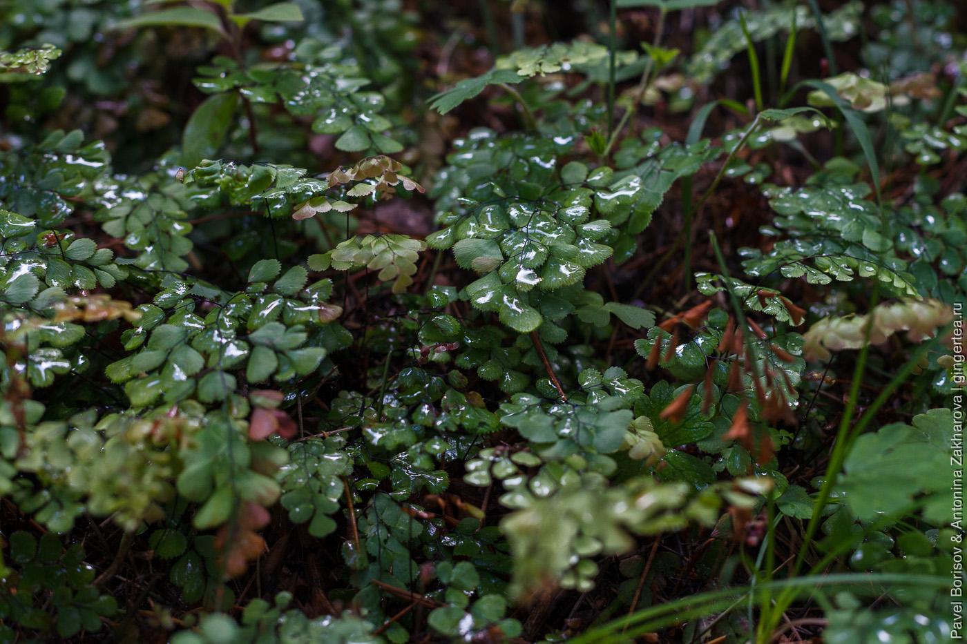 капли дождя на папоротнике