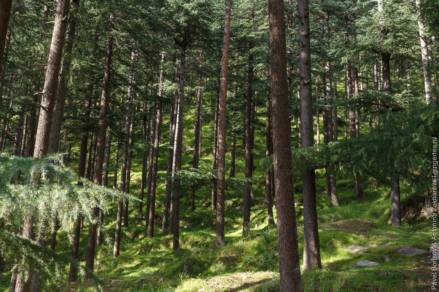 прогулка в долине Куллу
