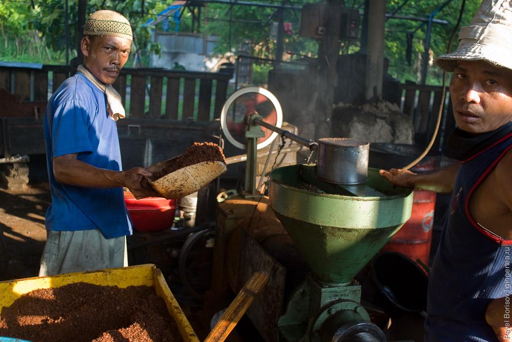 Что такое кокосовая фабрика. Репортаж с острова Себеси