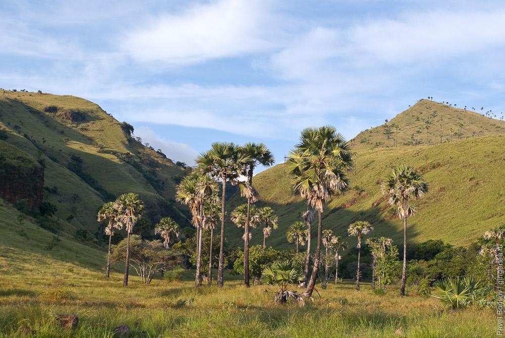 долина с веерными пальмами, fan palm valley