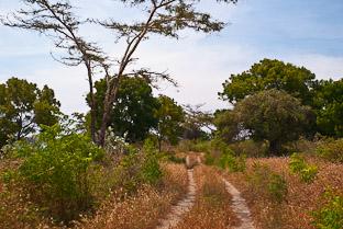 Животные сухого тропического леса в западно-балийском национальном парке