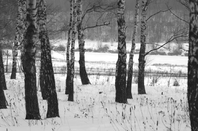 Лес около Оки