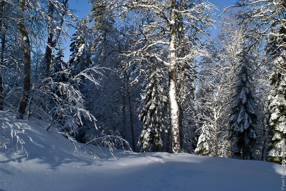 По пояс в снегу. Пеший поход на Мамдзышху в декабре