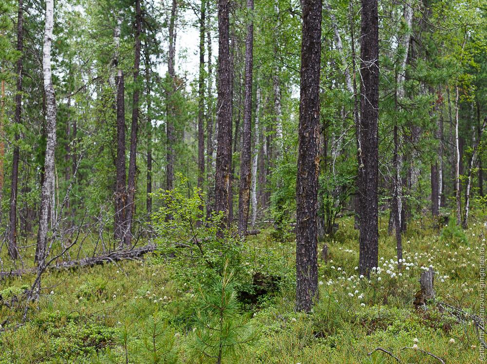 редколесье недалеко от платформы Глубокая