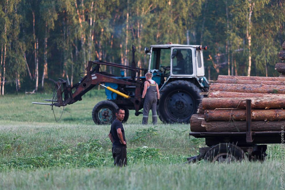 трактор с прицепом везет бревна в Бурятии