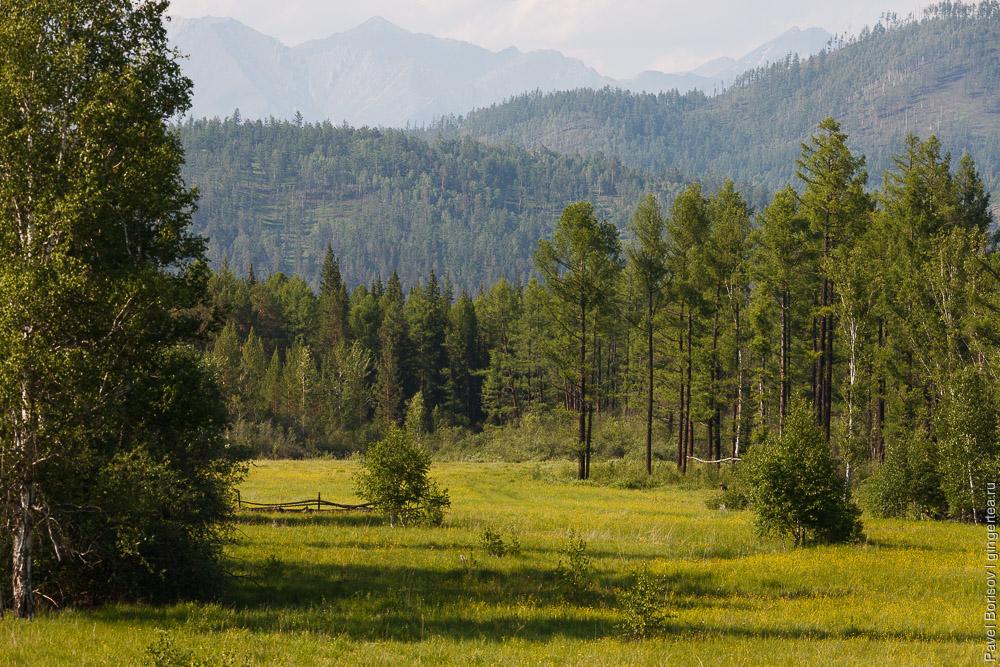 горы и лес в Бурятии