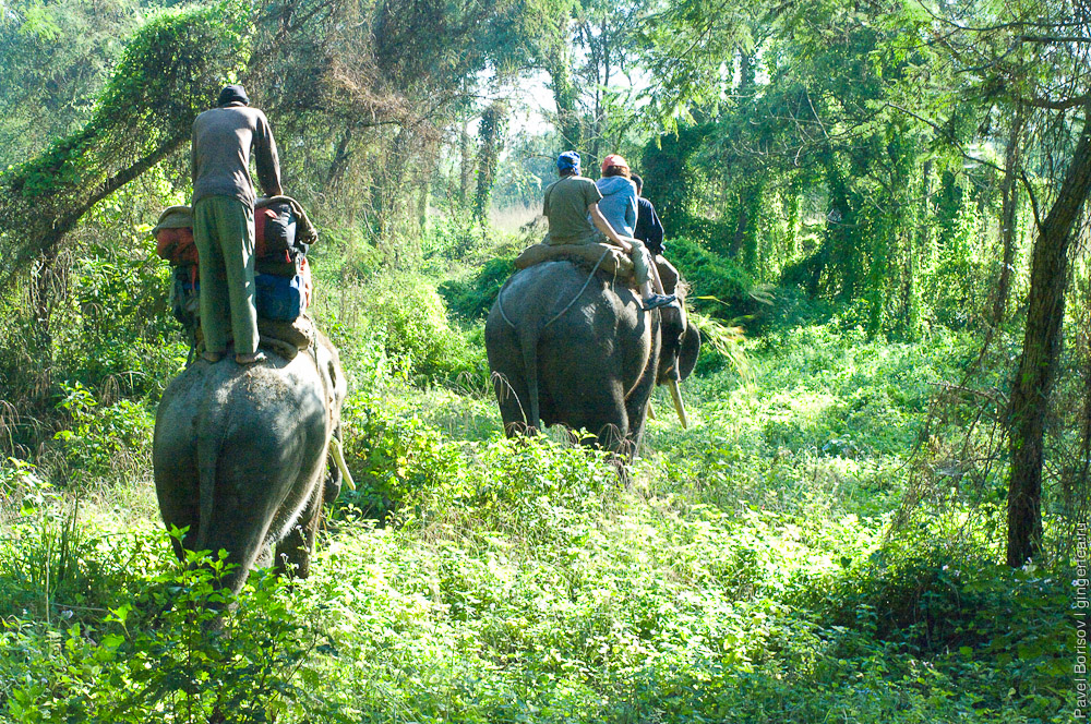 Как мы сделали бамбуковый плот и сплавились на нем по реке Нараяни (Непал)