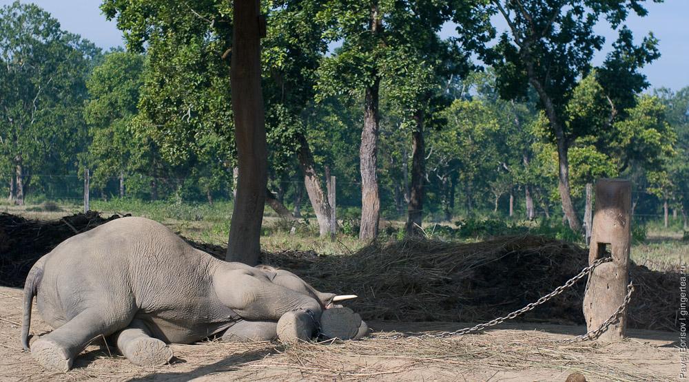 О роли слонов в непальском обществе. Репортаж из слоновьего питомника