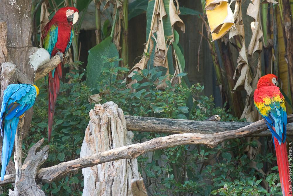 попугаи, parrots