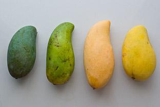 Какие бывают манго и как их правильно есть